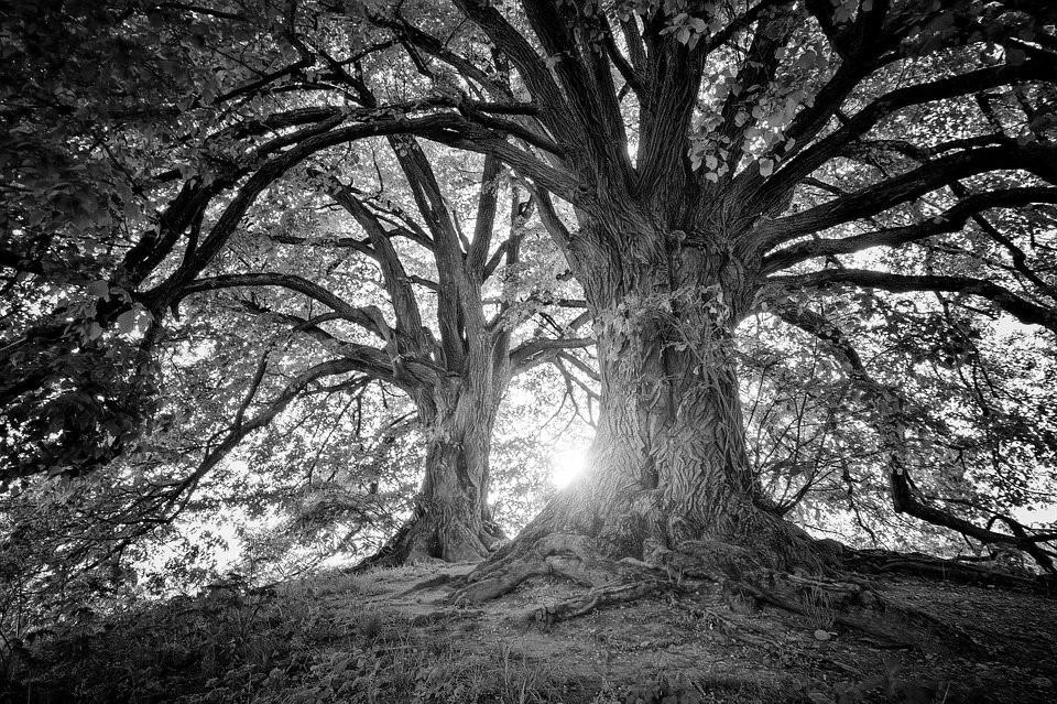 Persoonlijk leiderschap in je loopbaan 5 lessen uit de natuur